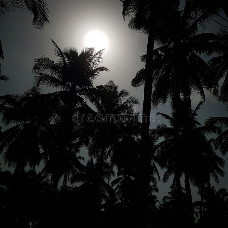 Helle Mondlicht-Kokosnussbäume lizenzfreie stockfotografie