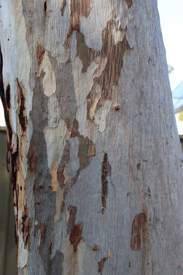 Helle Naturholzbeschaffenheit stockfoto