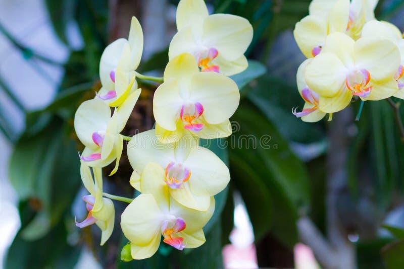 Helle Orchideenblume lizenzfreie stockfotos