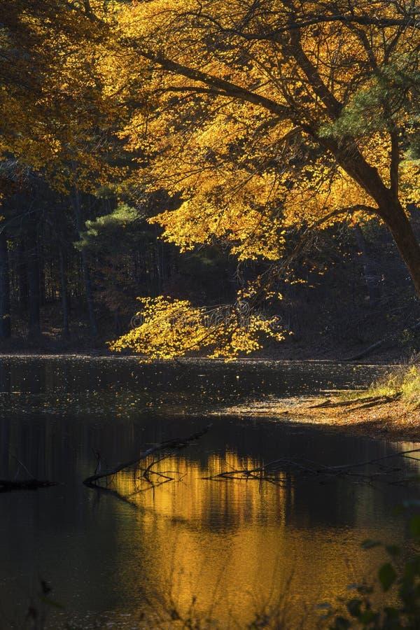 Helle Reflexionen des Herbstlaubs auf dunklem Wasser, Mansfield, Betrug stockbild