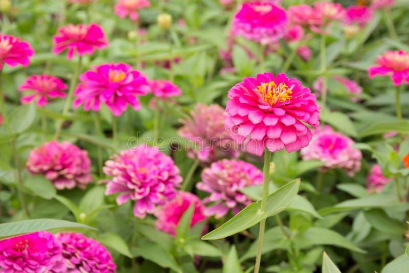 Helle rosa Blumen lizenzfreie stockfotografie