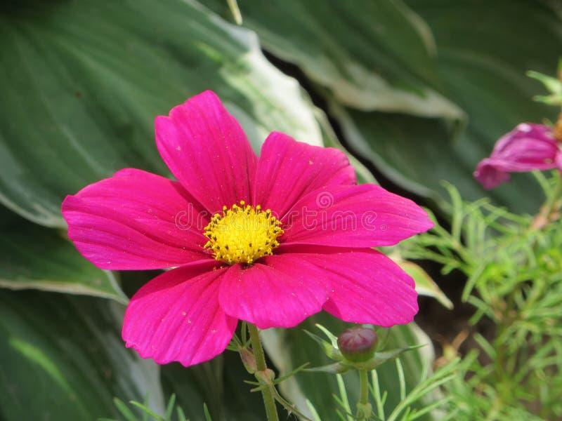 Helle rosafarbene Blume lizenzfreies stockfoto