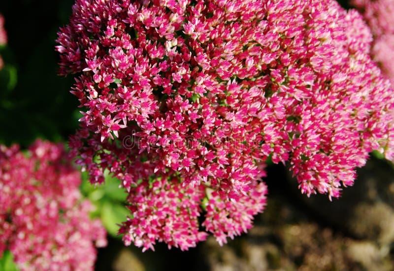 Helle rote Blumen im Spätsommer stockfotografie