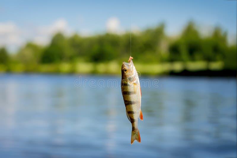 Helle schöne gefangene Fische der Stange, hängend am Haken mit Köder auf Hintergrund von Naturlandschaft des Wassers, Himmel stockbilder