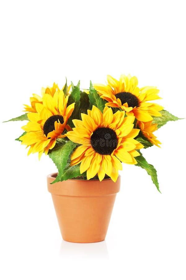 Helle Sonnenblumen in einem Potenziometer lizenzfreie stockfotografie