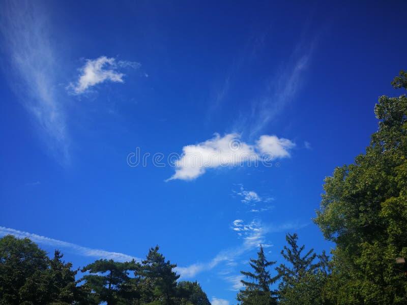 Helle weiße Wolken im blauen Himmel über grünen Bäumen am Sommernachmittag lizenzfreie stockfotos