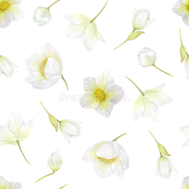 hellebore Modello senza cuciture dei fiori bianchi La primavera, l'inverno fiorisce l'acquerello romantico o il fondo di nozze royalty illustrazione gratis
