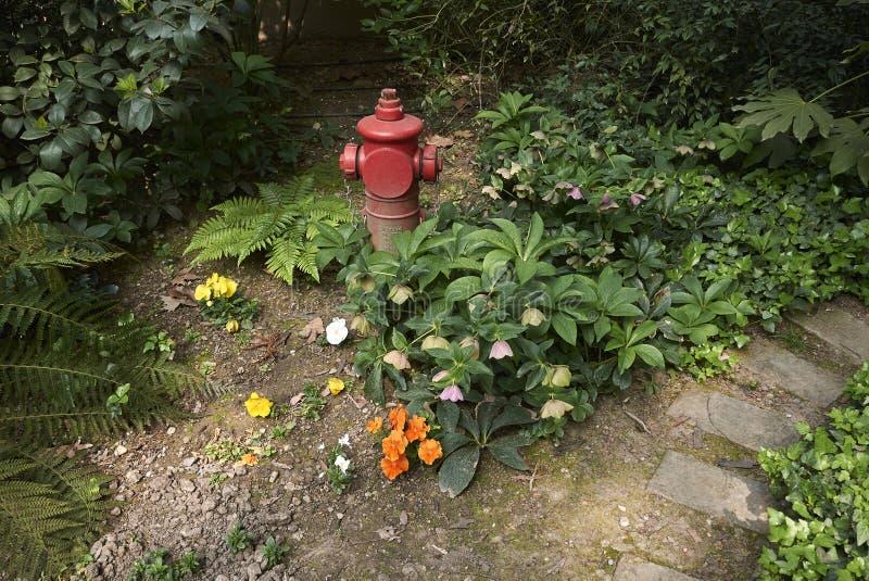 Helleborus orientalis Blütenstand stockfotografie