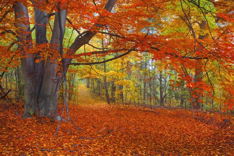 Heller Autumn Colors, Weg im Wald lizenzfreie stockbilder