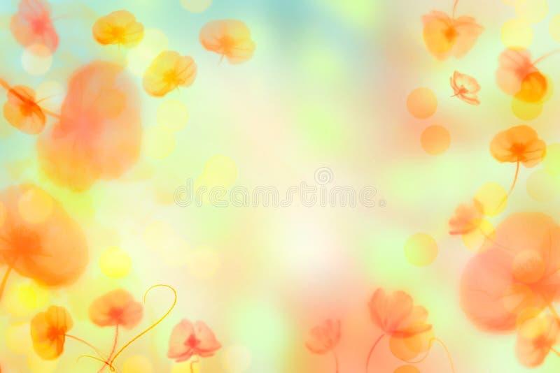 Heller Blumenhintergrund mit Mohnblumen lizenzfreie stockbilder