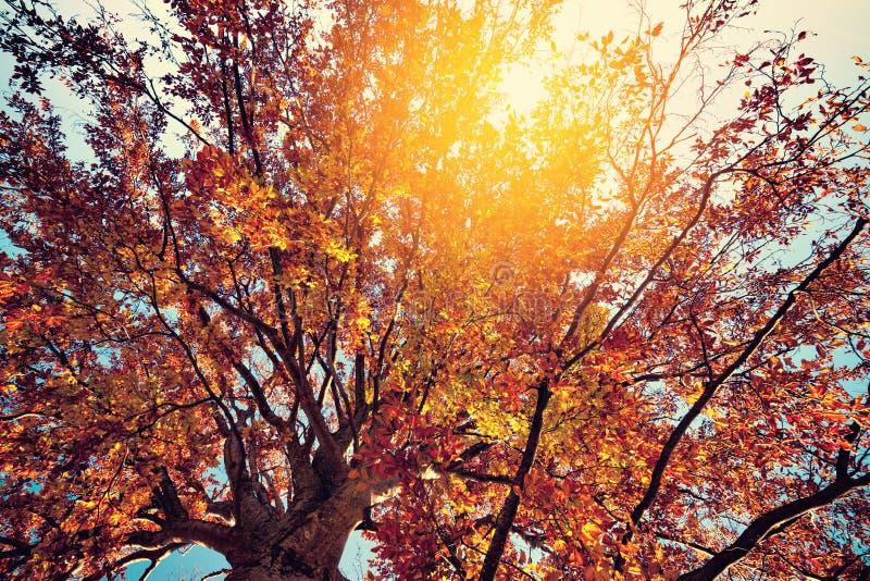 Heller Farbherbstbaum stockbild
