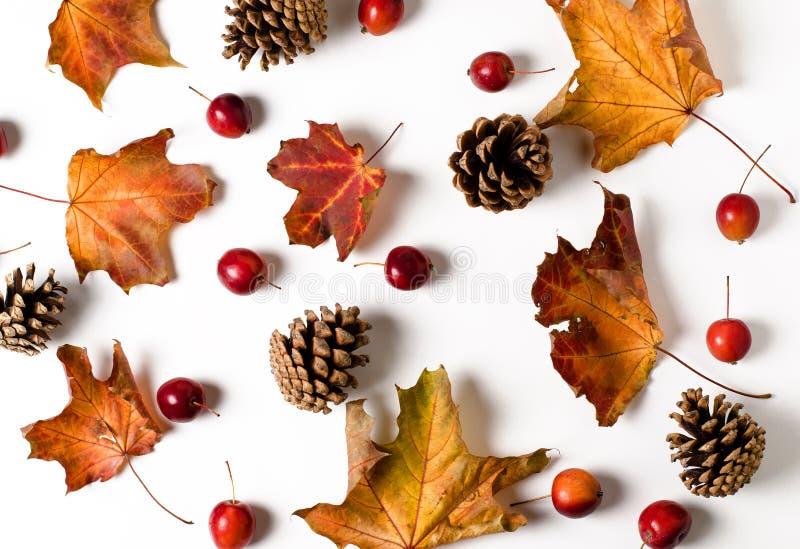 Heller gelber Herbstlaub, Kastanien, Kiefernkegel und orange Physalisblumen auf einem weißen Hintergrund Sch?nes Herbstfeld obers lizenzfreies stockfoto