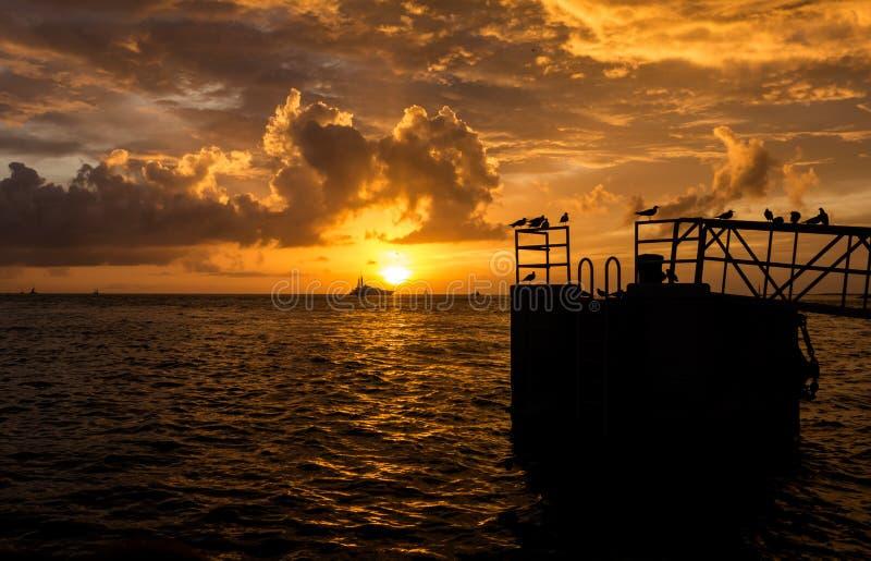 Heller gelber Sonnenuntergang auf Mallory Square in Key West mit Vögeln stockfotos