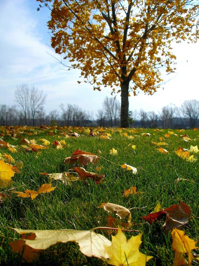 Heller Herbst-Tag stockfotos