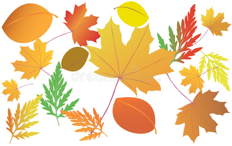 Heller Herbstlaub vektor abbildung