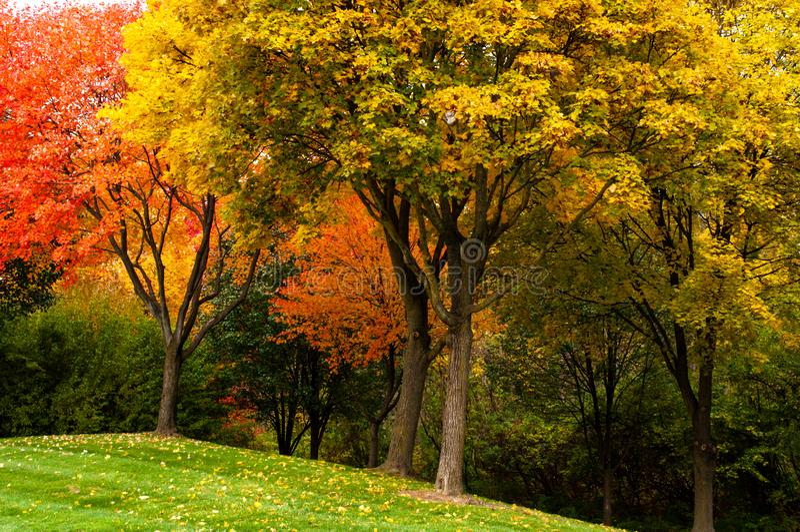 Heller Herbstlaub in Michigan stockbilder