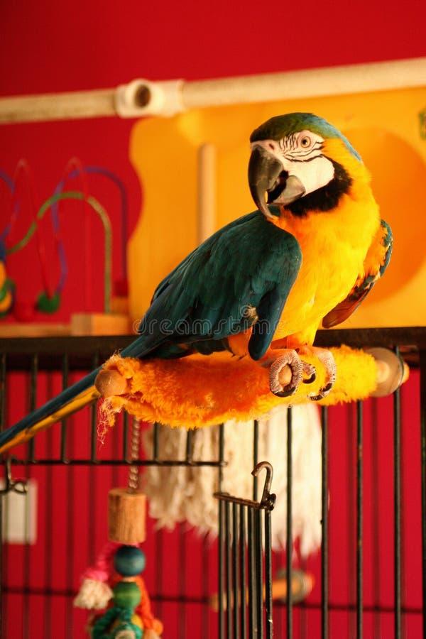 Heller Papagei lizenzfreie stockfotografie