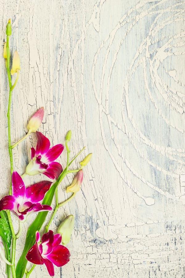 Heller schäbiger schicker hölzerner Hintergrund mit Orchidee lizenzfreies stockbild