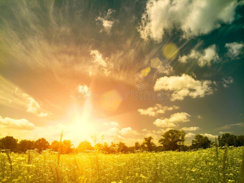 Heller Sommersonnenuntergang über wilder Wiese. lizenzfreie stockfotografie