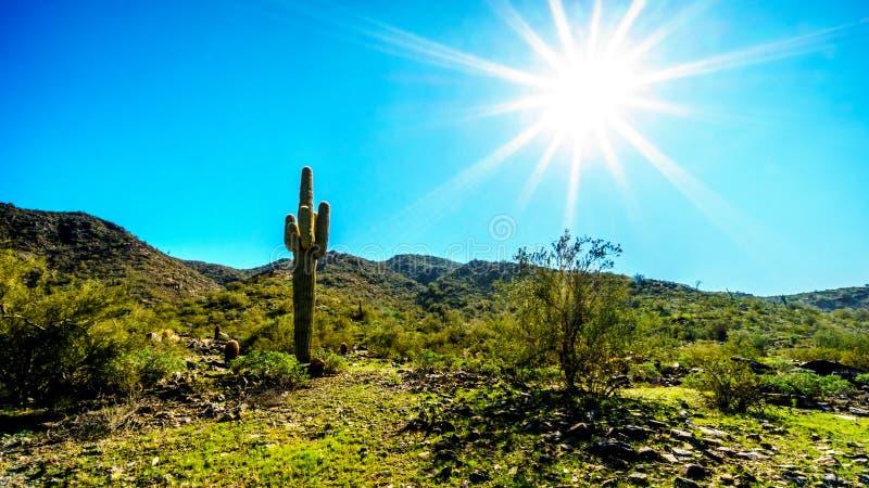 Heller Sonnenschein strahlt über der Wüsten-Landschaft und einem Saguaro-Kaktus im Südgebirgspark aus lizenzfreies stockbild