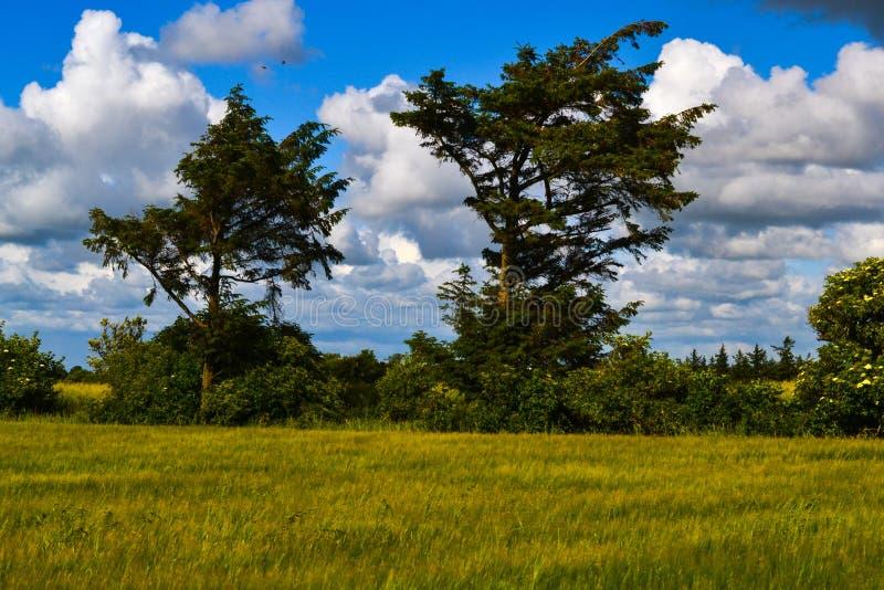 Heller Sonnenschein und große weiße Wolken in Dänemark lizenzfreie stockbilder