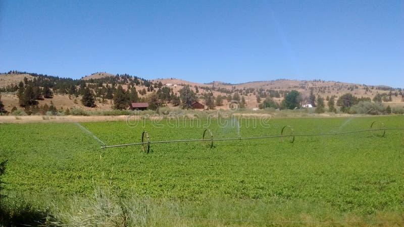 Heller sonniger Himmel tankt die Ernte, um das Vieh einzuziehen stockfoto