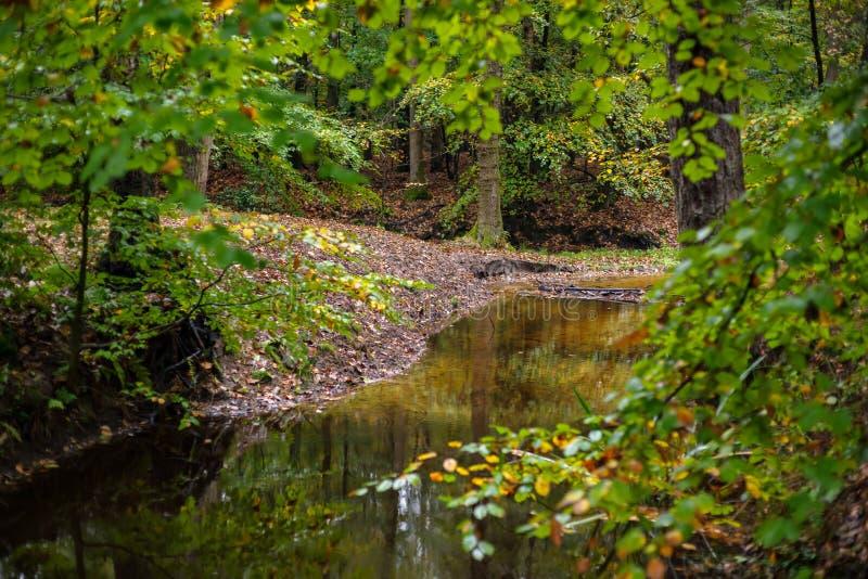 Heller Waldfluß am Fall stockbilder