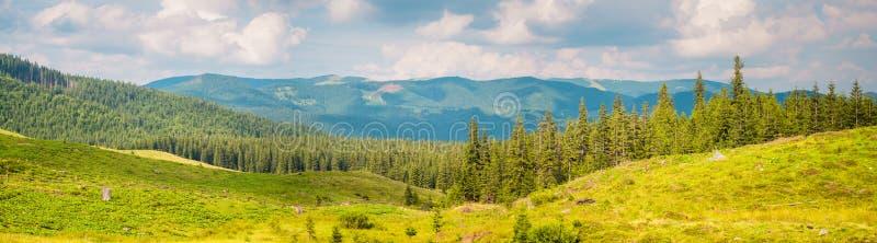 Helles Bergpanorama mit Tannenwald im Sommer lizenzfreie stockfotos