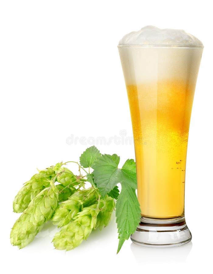 Helles Bier und Hopfen lizenzfreie stockbilder