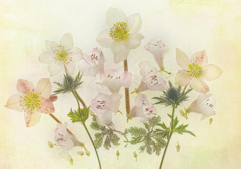 Helles botanisches in der Blüte lizenzfreie stockbilder