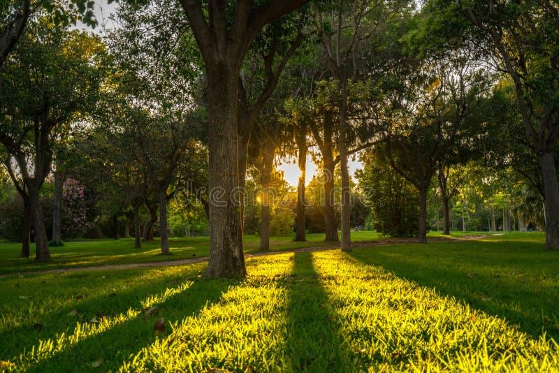 Helles Brechen durch das Blatt des Baums und der langen Schatten während des Sonnenuntergangs im Park von Turia valencia lizenzfreie stockfotos