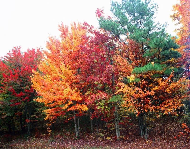 Helles, schönes Fall-Laub stockbild