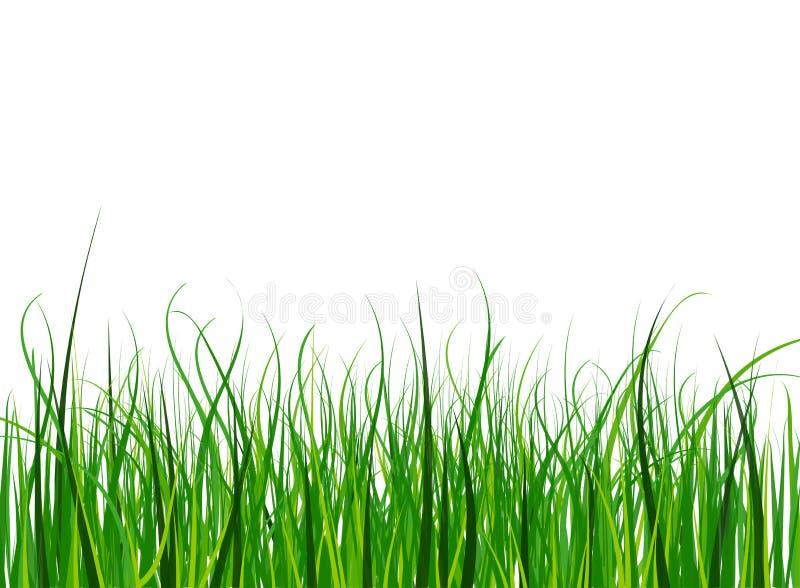 Helles und saftiges grünes Gras auf einem Hintergrund des blauen Himmels lizenzfreie abbildung