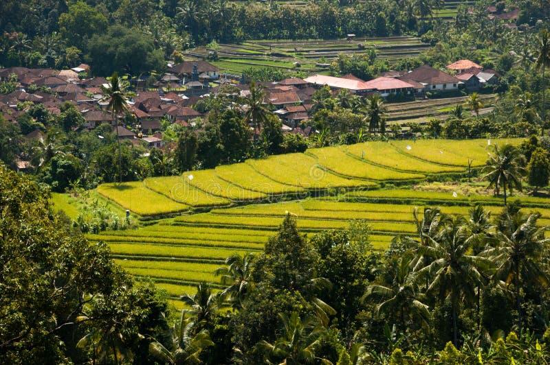 Hellgrüne, terassenförmig angelegte Reisfelder neben Dorf, Munduk, Bali, stockfoto