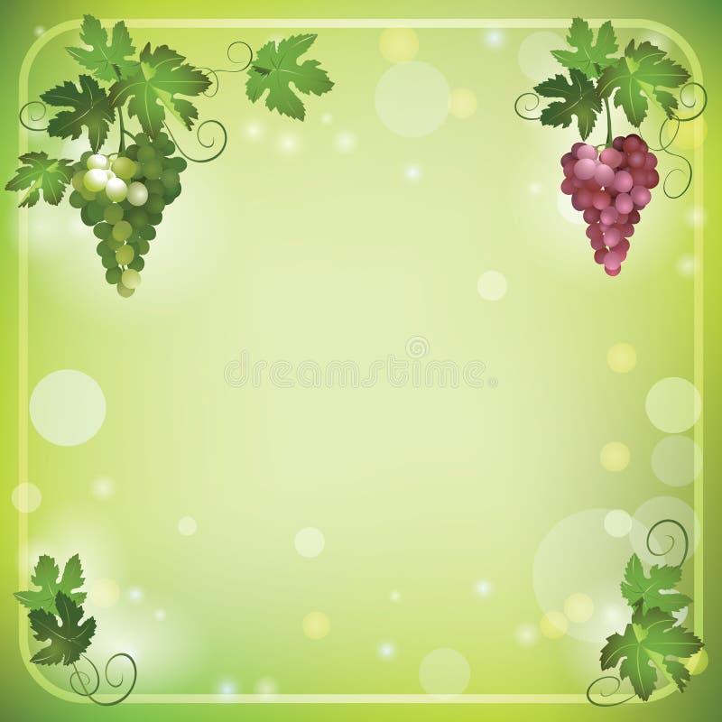 Hellgrüner Hintergrund mit Trauben vektor abbildung