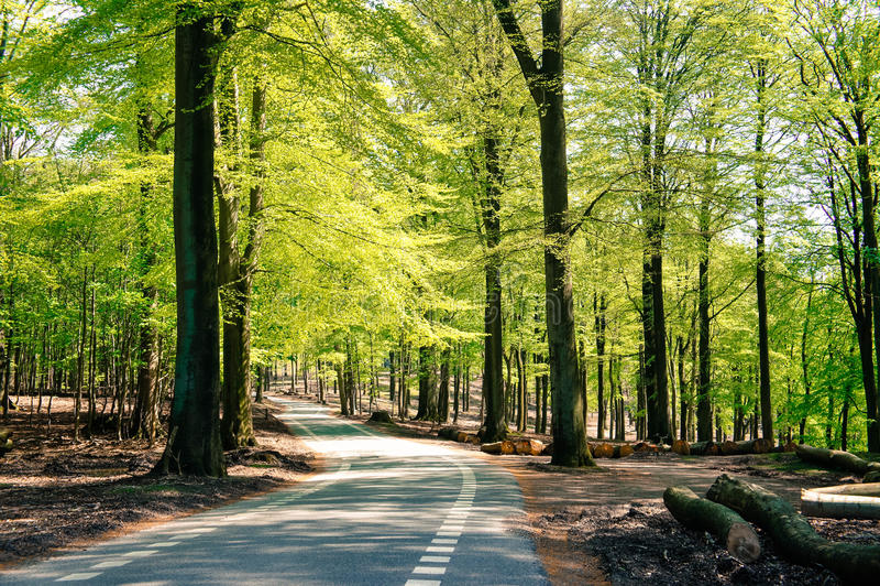 Hellgrüner Wald stockbilder