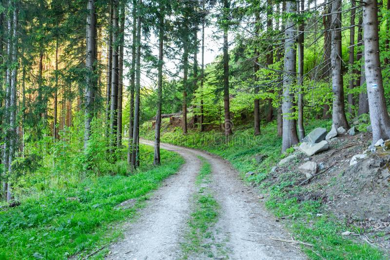 Hellgrüner Waldnatürlicher Gehweg im sonniger Tageslicht SonnenscheinBäume des Waldes Sun durch Wald des klaren Grüns stockfoto