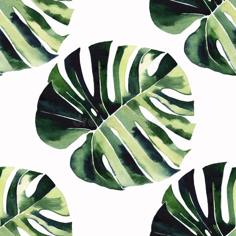 Hellgrünes tropisches wunderbares Hawaii-Blumensommerkräutermuster von ein Tropen monstera Palmblättern lizenzfreie abbildung