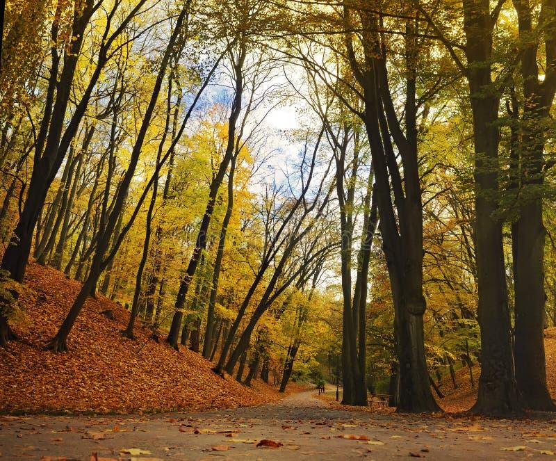 Helling die met overgehelde bomen in het park wordt behandeld royalty-vrije stock fotografie