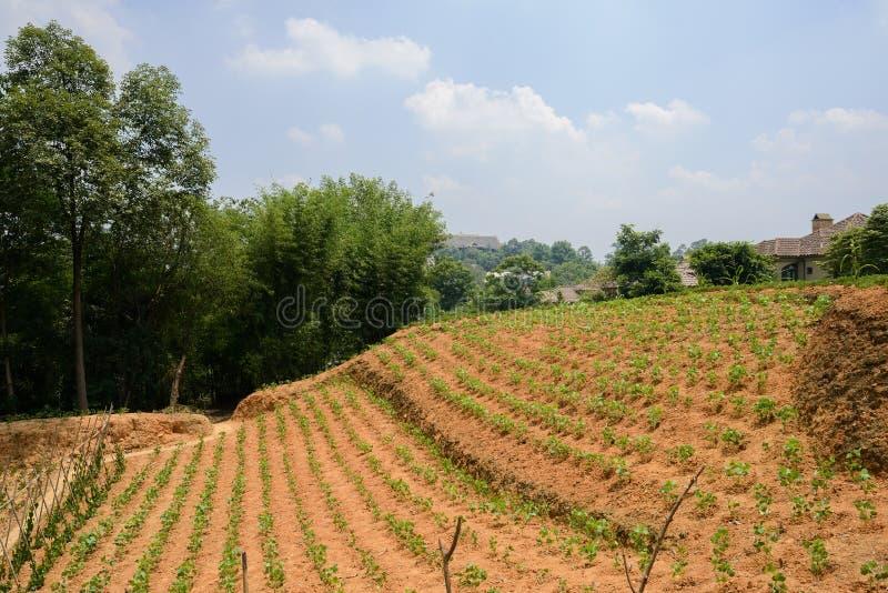 Hellings gecultiveerd land in de voorsteden in zonnige de zomermiddag stock afbeelding