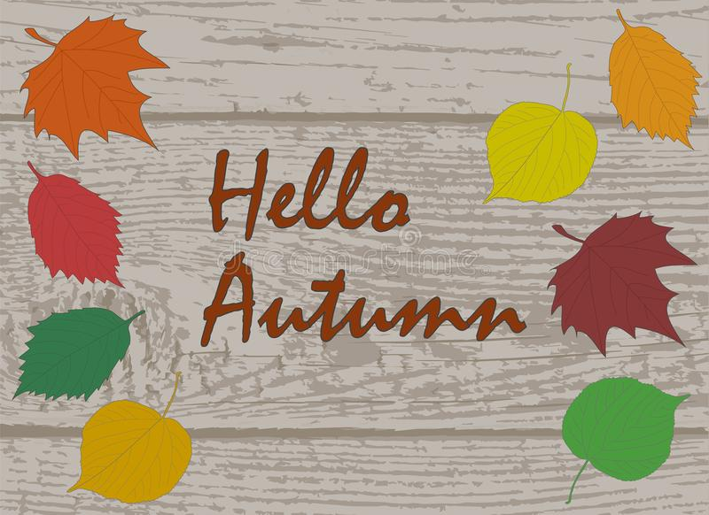 Hello Autumn calligraphy text on wooden plank board with colorful various autumn leaves, linden alder and maple leaf stock illustration