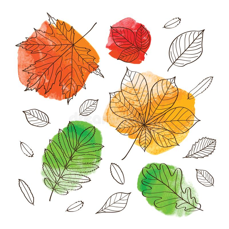 Hello autumn! Fall of the leaves. Autumn leaves of trees on an orange, red, green and yellow watercolor background. Sketch, design elements. Vector stock illustration