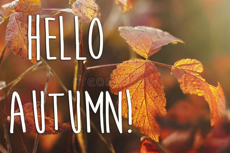 Hello autumn fall text sign on beautiful red autumn leaves in t. He sunshine on the background of a forest. seasonal greeting card concept. autumn image stock photography