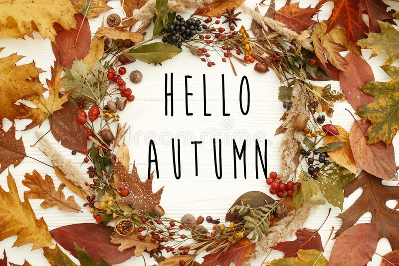 Hello Autumn text on autumn wreath flat lay. Fall leaves in circle with berries,nuts,acorns,flowers,herbs on white background. S. Easons greetings card stock illustration