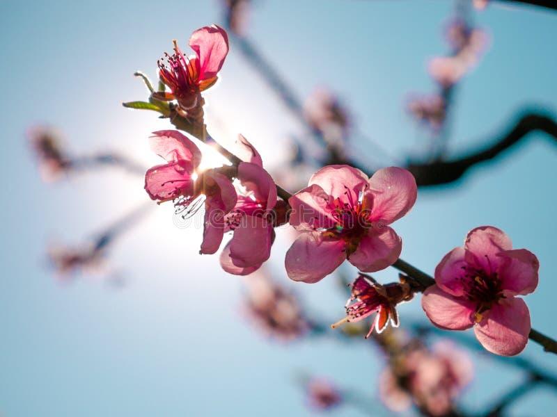 Hello-de lente - bloem in de zonneschijn stock afbeelding