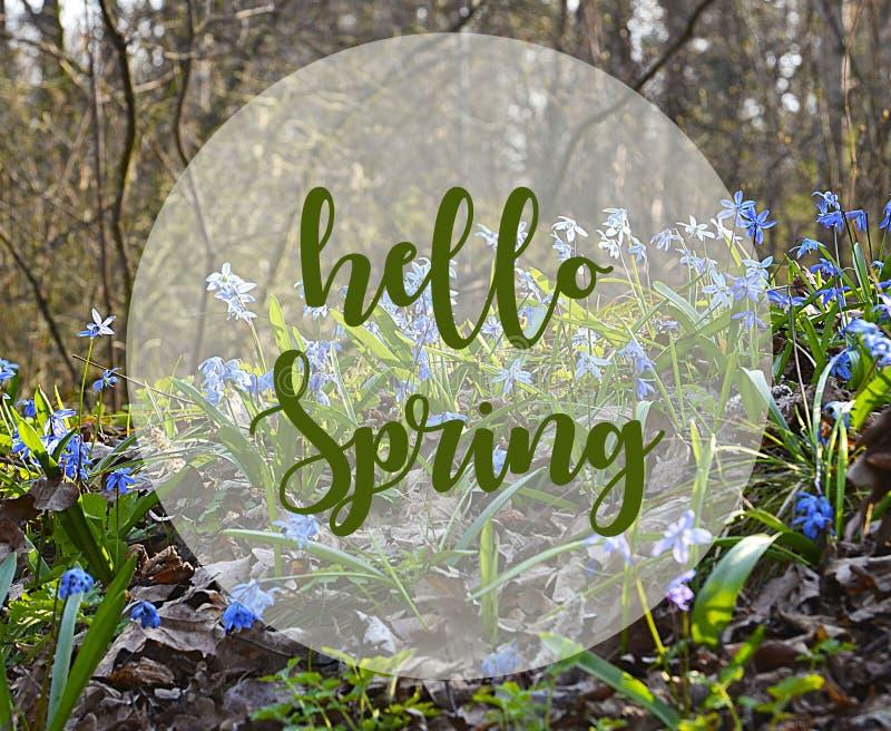 Hello-de lenteachtergrond Blauwe Scilla-bloemen in de lente forestBlue sneeuwklokjes stock foto's