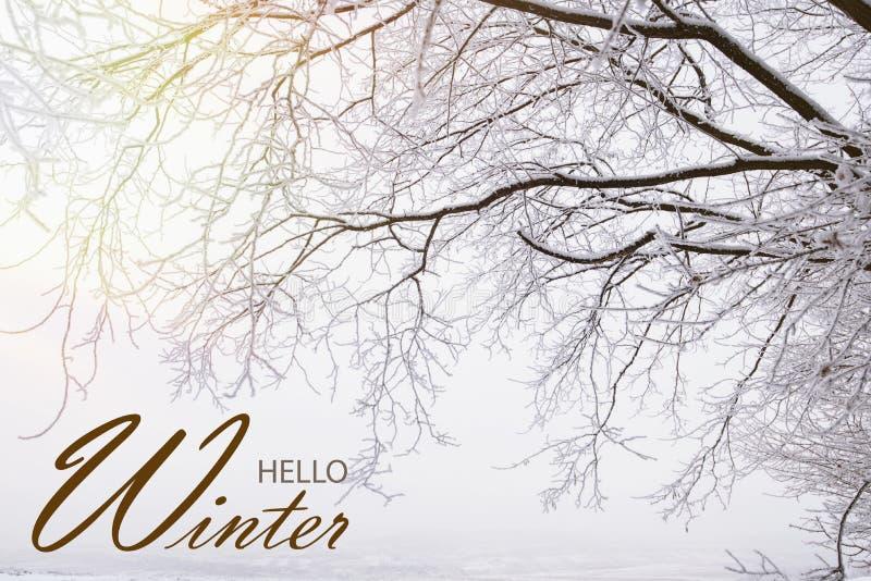 Hello-de Winterbehang stock foto's