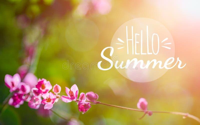 Hello-de Zomer achtergrondconcept De bloemenachtergrond van de bannervakantie Mooie roze bloem op groene aardachtergrond stock illustratie