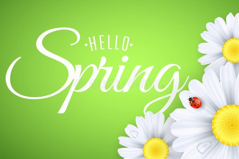 Hello fjädrar hälsningkortet Nyckelpigaäckelar på blommorna Realistiska tusenskönor Kalligrafi och bokstäver Säsongsbetonat baner stock illustrationer