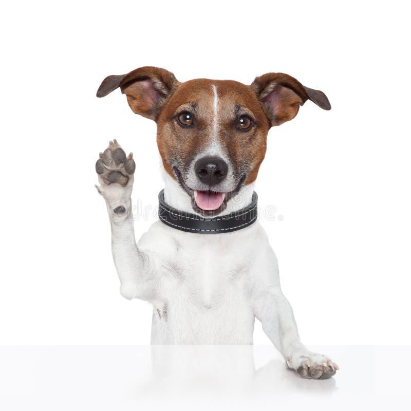Free Hello Goodbye High Five Dog Royalty Free Stock Photo - 26693145